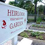 Heirloom Garden at the Chesapeake Bay Maritime Museum in St. Michaels, Maryland.
