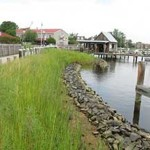 The Living Shoreline at the Chesapeake Bay Maritime Museum in St. Michaels, Maryland.