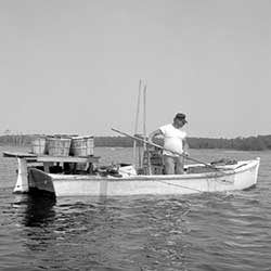 A waterman in a Pot Pie Skiff catches a crab in his dipnet after it comes to the surface on his trotline, c. 1979. Photograph by John Hurt Whitehead, III. Collection of the Chesapeake Bay Maritime Museum, St. Michaels, MD. Gift of the photographer.