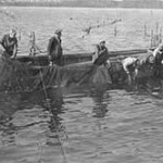 Crew of a pound-net skiff tending a pound net on the Chesapeake Bay, c. 1940. Photographer unknown. Collection of the Chesapeake Bay Maritime Museum, St. Michaels, MD. Gift of Dr. Harry M. Walsh.